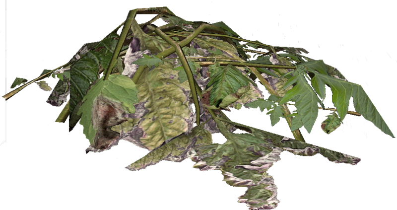 Rostlinný materiál / Plant material